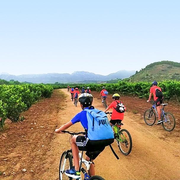 ruta en bicicleta entre viñedos